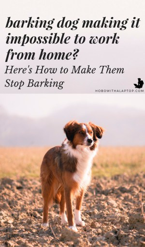 How to Make Street Dogs Stop Barking with a Simple Trick