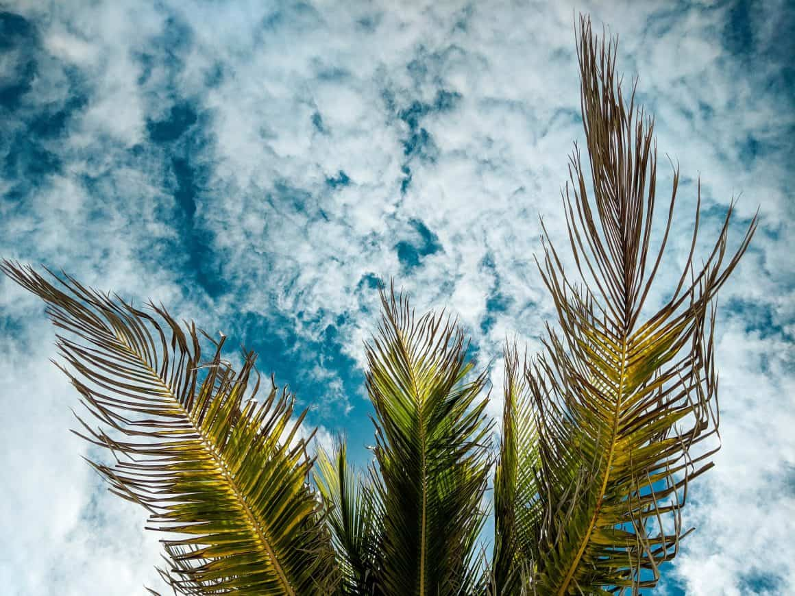 Blue sky peeking through palm leaves